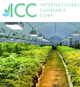 ICC International Cannabis Corp.
